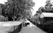 Northampton, The Aviary Abington Park c.1955