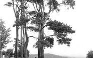 Redhill, The Common 1915