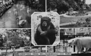 Wellingborough, Composite, Zoo Park c.1965