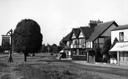 Photo of Weston Green, the Greyhound c1955
