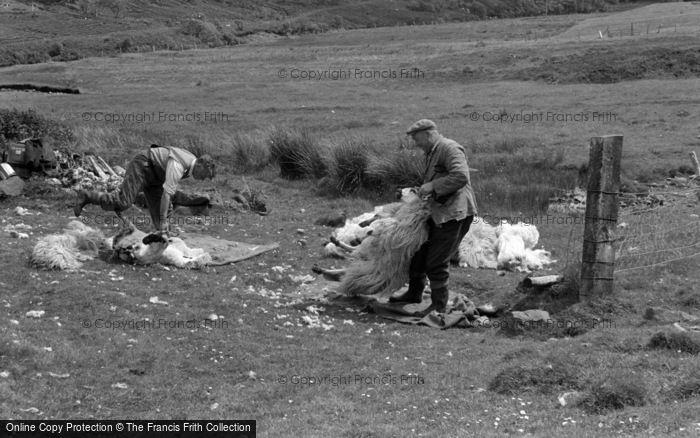 Photo of Skye, Sheep Shearing 1961