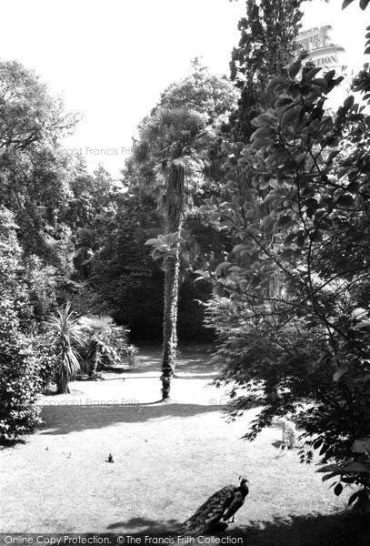 Photo of Abbotsbury, Subtropical Gardens c.1965