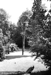 Abbotsbury, Subtropical Gardens c.1965