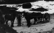 Aberffraw, Horses, Porthcwyfan Beach  c.1939