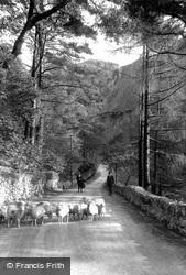 Aberglaslyn Pass, Sheep 1913, Pass Of Aberglaslyn