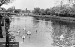Abingdon, The Swans c.1960