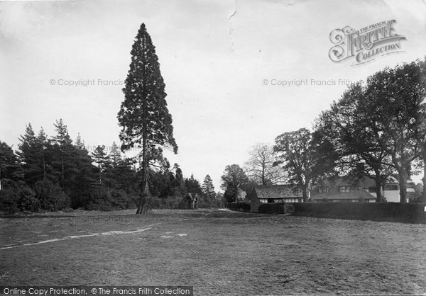 Photo of Abinger Common, 1921