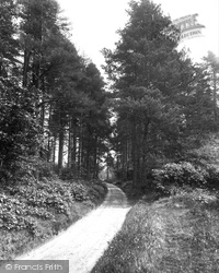 Abinger Common, Path To Friday Street 1924