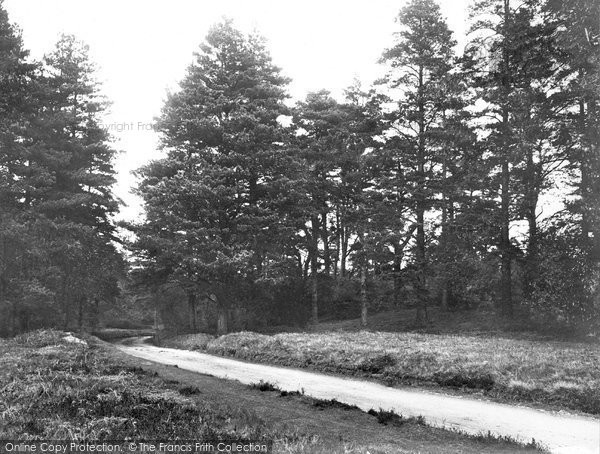 Photo of Abinger Common, Road To Friday Street 1921