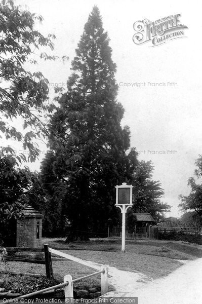 Photo of Abinger Common, The Stocks 1907