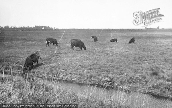 Photo of Acle, The Marshes c.1955