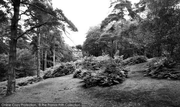 Photo of Addiscombe, Coombe Woods c.1965