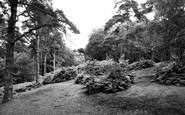 Addiscombe, Coombe Woods c1965