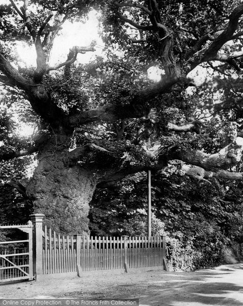 Photo of Addlestone, Crouch Oak 1904