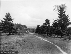 Albury, Heath From The Warren 1925