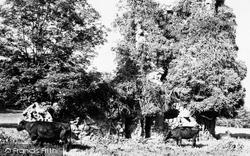 Asloun Castle 1949, Alford