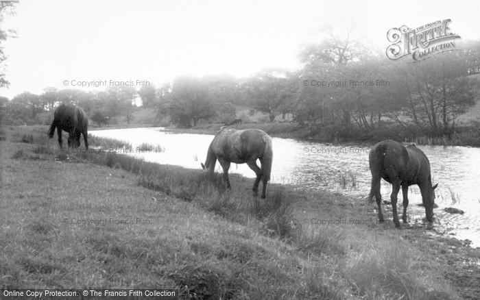 Photo of Alnwick, The River c.1965