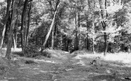 Amersham On The Hill, Rectory Woods c.1955
