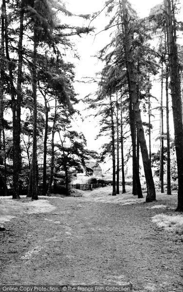 Ampthill, The Woods c.1955