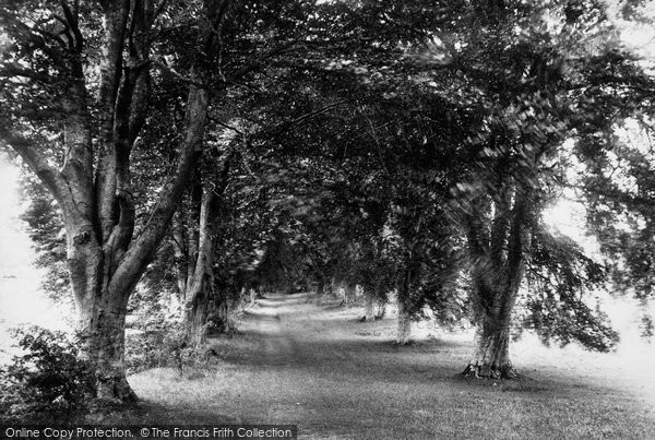 Photo of Andover, Beech Avenue, Harewood Forest 1899