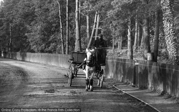 Photo of Ascot, Horse And Cart 1906