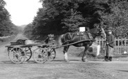 Ascot, Horse And Cart 1906