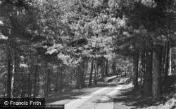 Ash, Common 1956