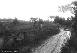 Ash, Fox Hills 1906