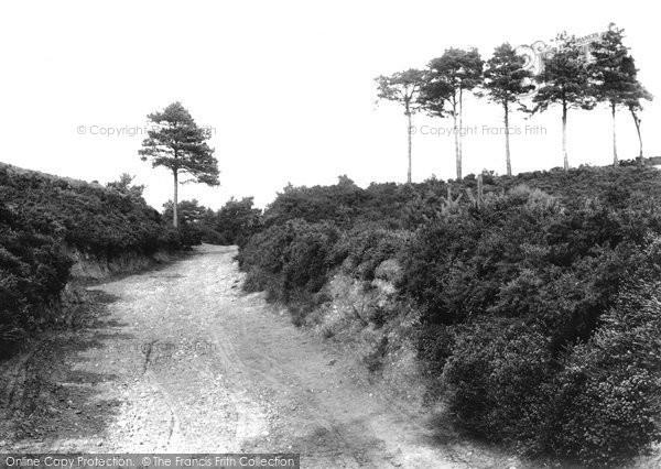 Photo of Ash, Fox Hills 1906