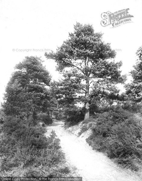 Photo of Ash, Fox Hills 1906
