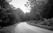 Ashby, Scawby Woods c.1955