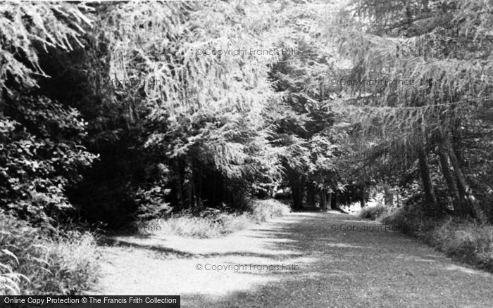 Photo of Ashcott, Etonhurst, The Spinney c.1955