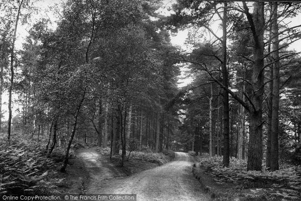 Photo of Ashdown Forest, Broadstone Warren 1908