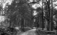 Ashdown Forest, Broadstone Warren 1908