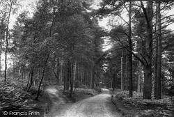 Ashdown Forest, Broadstone Warren 1908