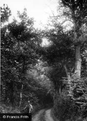 Ashdown Forest, c.1900
