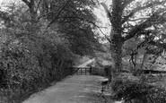 Ashdown Forest photo