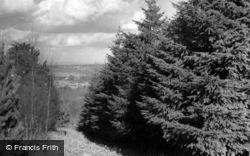 Douglas Fir Plantation, Broadstone Warren Scout Camp c.1955, Ashdown Forest
