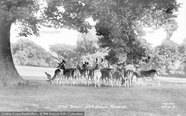 Photo of Ashdown Forest, The Deer c.1955