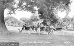 Ashdown Forest, The Deer c.1955