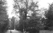 Ashtead, Barnett Wood Lane 1913