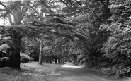 Ashtead, Church Walk c.1955