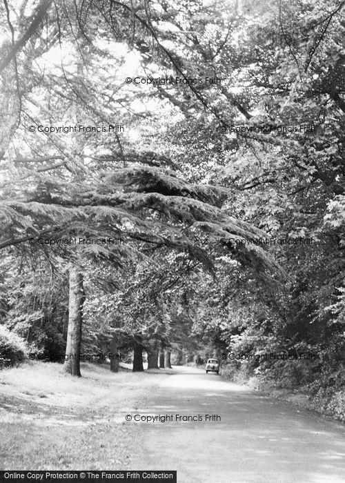 Photo of Ashtead, Church Walk c.1960