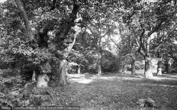 Photo of Ashtead, In The Woods 1908