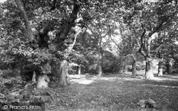 Ashtead, In The Woods 1908