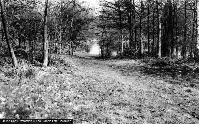 Photo of Ashtead, Park, The Lake c.1960