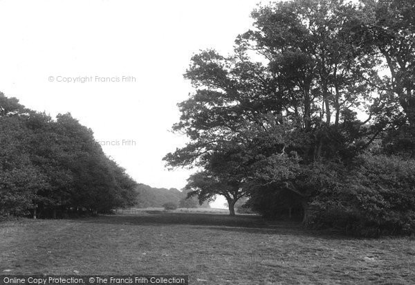 Photo of Ashtead, Woods 1908