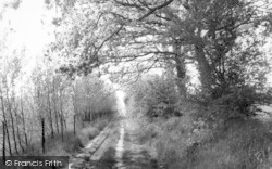Assington, Wood Path c.1960