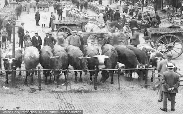 Photo of Aylesbury, Market Square, Cattle 1921