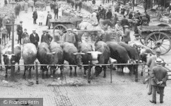 Aylesbury, Market Square, Cattle 1921